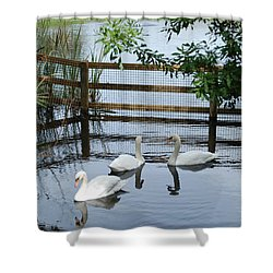Swans In The Pond Shower Curtain by Beverly Stapleton