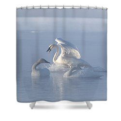 Shower Curtain featuring the photograph Trumpeter Swans - Three's Company by Patti Deters