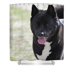 Sweet Akita Dog Shower Curtain