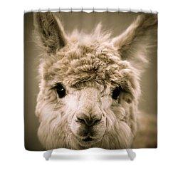 Sweet Alpaca Shower Curtain