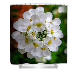 Sweet Alyssum Shower Curtain by Patti Whitten