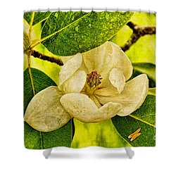 Sweet Bay Magnolia After The Rain Shower Curtain by Lois Bryan