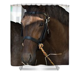 Sweet Brown Shower Curtain by Edgar Laureano