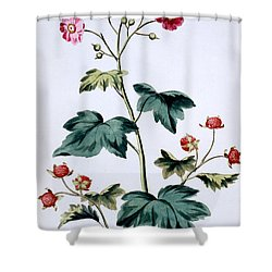 Sweet Canada Raspberry Shower Curtain