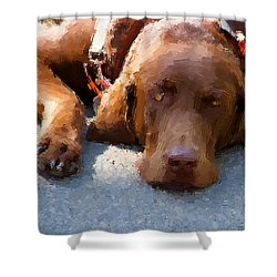 Sweet Chocolate Shower Curtain by Alice Gipson