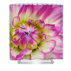 Sweet Dahlia Shower Curtain by Sami Martin