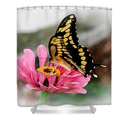 Sweet Delicacy Shower Curtain