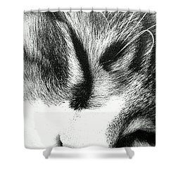 Shower Curtain featuring the photograph Sweet Dreams by Jacqueline McReynolds