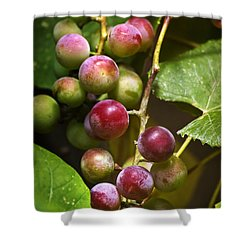 Sweet Grapes Shower Curtain by Christina Rollo