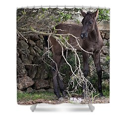 sweet heart - A tender foal wait his beloved mother  Shower Curtain