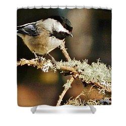 Sweet Little Chickadee Shower Curtain by VLee Watson