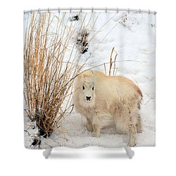 Sweet Little One Shower Curtain