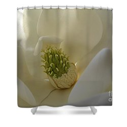 Sweet Magnolia Shower Curtain by Peggy Hughes