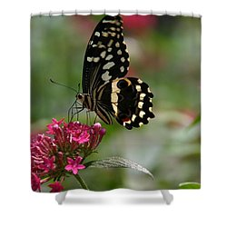Shower Curtain featuring the photograph Sweet Nectar by Denyse Duhaime