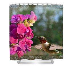 Sweet Pea Hummingbird IIi Shower Curtain by Debbie Portwood