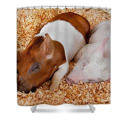 Sweet Piglets Nap Art Prints Shower Curtain