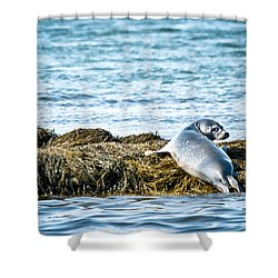 Sweet Seal Shower Curtain by Cheryl Baxter