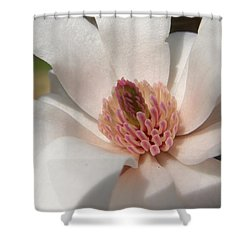 Shower Curtain featuring the photograph Sweet Star Magnolia by Caryl J Bohn