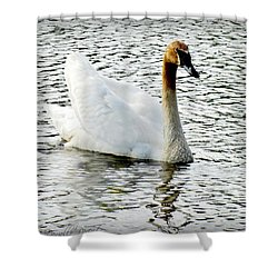 Sweet Swan Swimming Shower Curtain by Danielle  Parent