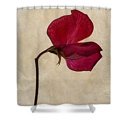 Sweet Textures Shower Curtain by John Edwards