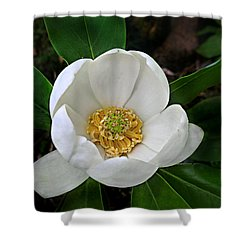 Sweetbay Magnolia Shower Curtain by William Tanneberger