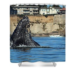 Swim Away Shower Curtain