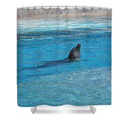 Swimming Shower Curtain by Amanda Eberly-Kudamik