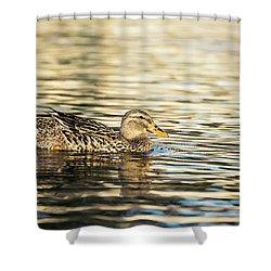 Swimming At Sunset Shower Curtain by Scott Pellegrin