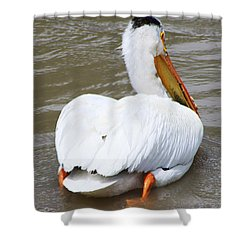 Shower Curtain featuring the photograph Swimming Away by Alyce Taylor