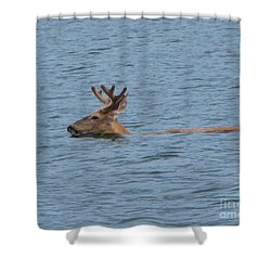 Swimming Deer Shower Curtain