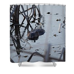Shower Curtain featuring the photograph Swimming by James Petersen