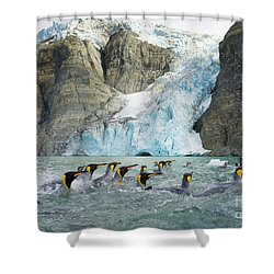 Swimmings King Penguins And Glacier Shower Curtain by Yva Momatiuk John Eastcott