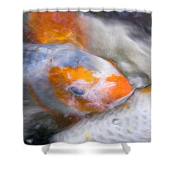 Swirling Koi Carp Shower Curtain