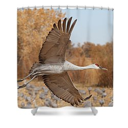 Swooping Sandhill  Shower Curtain by Ruth Jolly