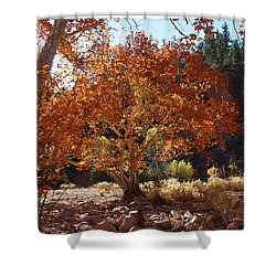 Sycamore Trees Fall Colors Shower Curtain by Tom Janca