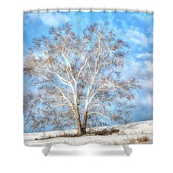 Shower Curtain featuring the photograph Sycamore Winter by Jaki Miller