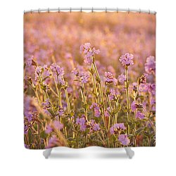 Symphony In Pink Shower Curtain by Anne Gilbert