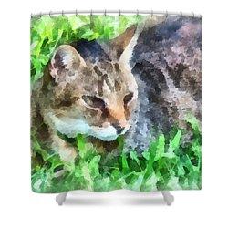 Tabby Cat Closeup Shower Curtain by Susan Savad