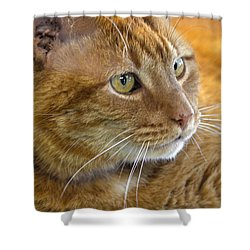Tabby Cat Portrait Shower Curtain by Sandi OReilly