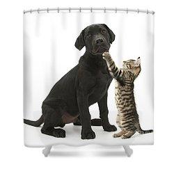 Tabby Male Kitten & Black Labrador Shower Curtain by Mark Taylor