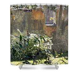 Tabby On The Old Point Shower Curtain by Patricia Greer