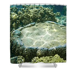 Table Top Coral Shower Curtain by Denise Bird