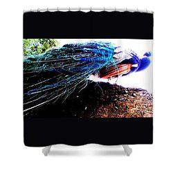 Tail Of Peacock Shower Curtain