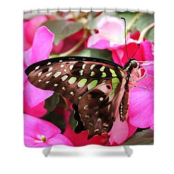 Tailed Jay Butterfly #4 Shower Curtain