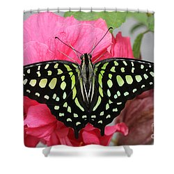 Shower Curtain featuring the photograph Tailed Jay Butterfly #6 by Judy Whitton