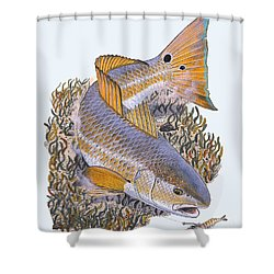 Tailing Redfish Shower Curtain