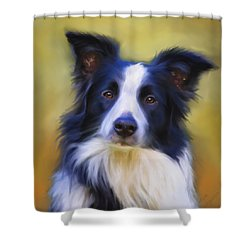 Beautiful Border Collie Portrait Shower Curtain