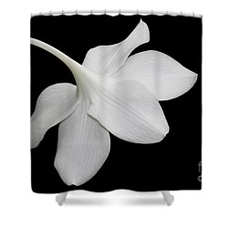 Take A Bow Shower Curtain by Judy Whitton