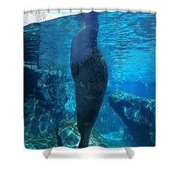 Taking A Peek Shower Curtain by Luther Fine Art