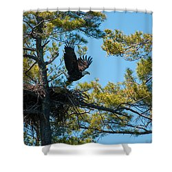 Shower Curtain featuring the photograph Taking Flight by Brenda Jacobs